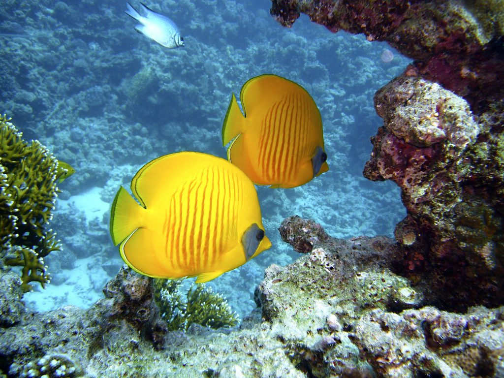 diving 1656380 1920 1024x768 - Malaysia Is The Perfect Destination For Adventure Lovers!
