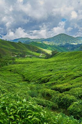 mountain 2289495 1920 268x402 - Malaysia Is The Perfect Destination For Adventure Lovers!