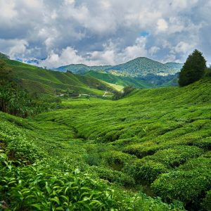 mountain 2289495 1920 300x300 - Malaysia Is The Perfect Destination For Adventure Lovers!